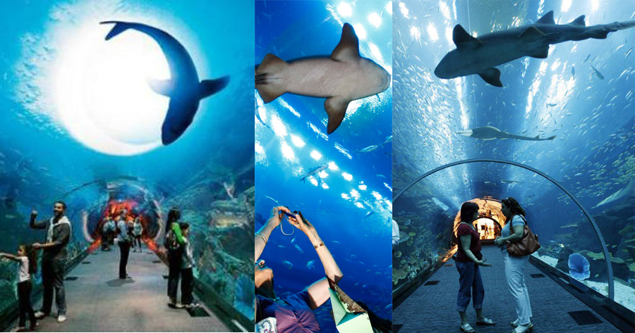 Dubai Dolphinarium - Beautiful Globa;