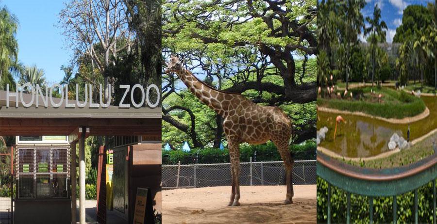 Honolulu-Zoo-BeautifulGlobal
