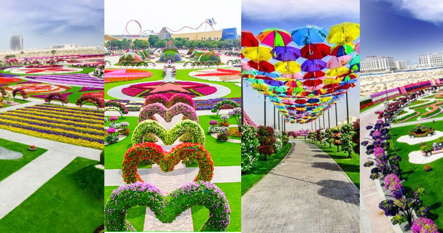 Miracle Garden - Beautiful Global