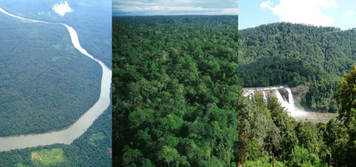 Top-10-Largest-Forest-In-The-World-BeautifulGlobal