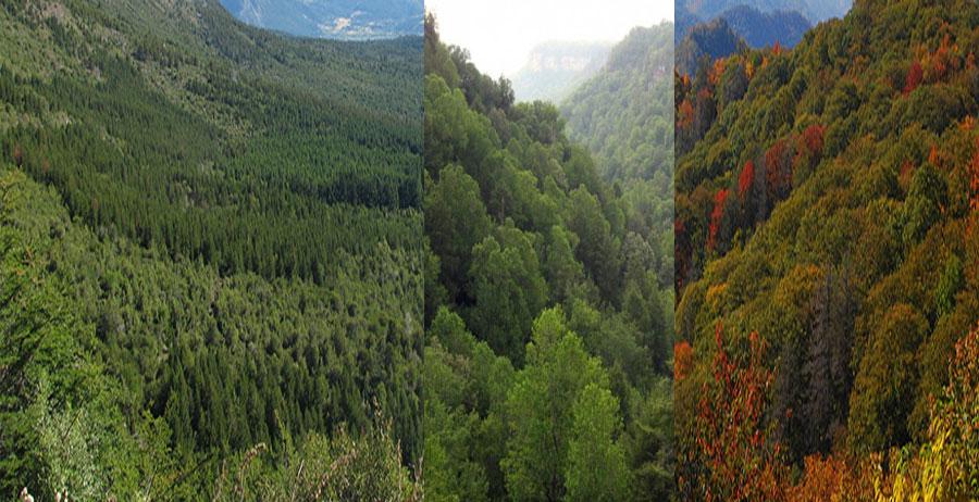 United-States-Forest-BeautifulGlobal