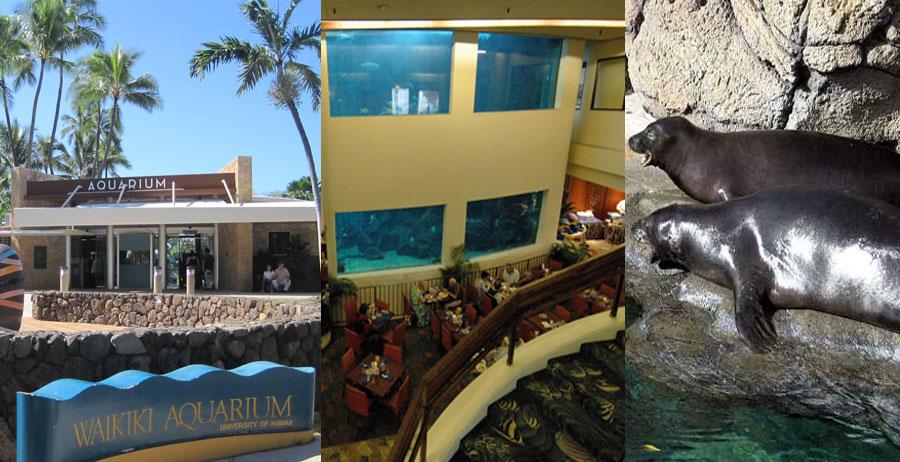 Waikiki-Aquarium-&-Beach-BeautifulGlobal