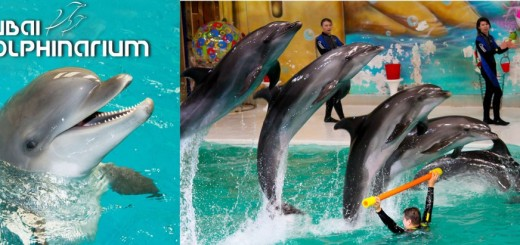 Dubai Dolphinarium Amazing Views