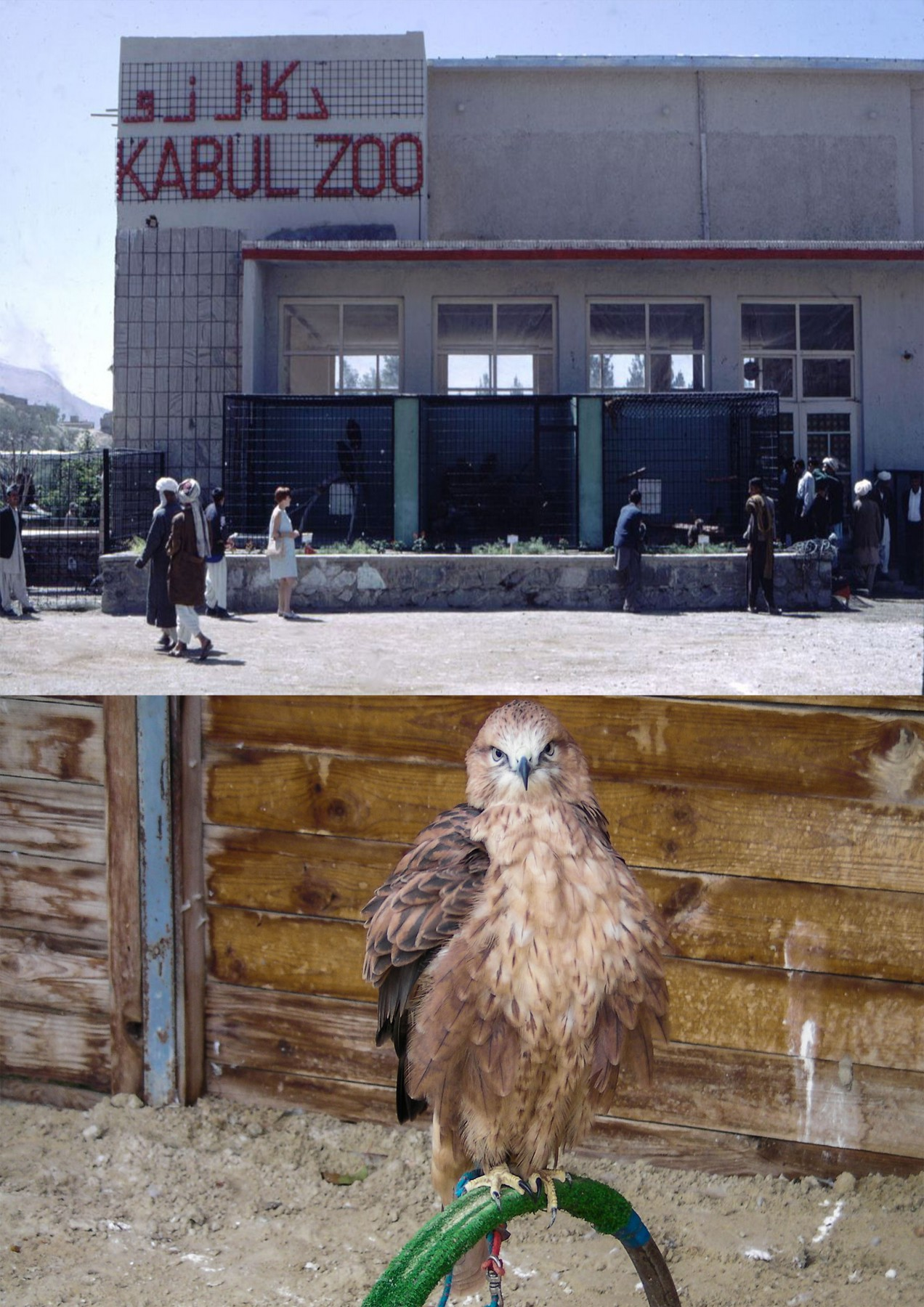 Kabul-Zoo