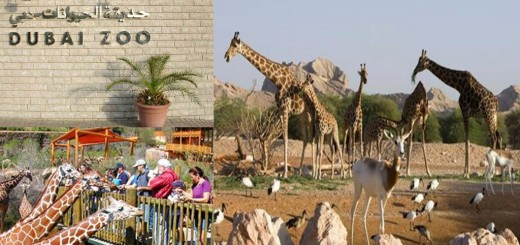 Top Dubai Zoo Jumeirah Views