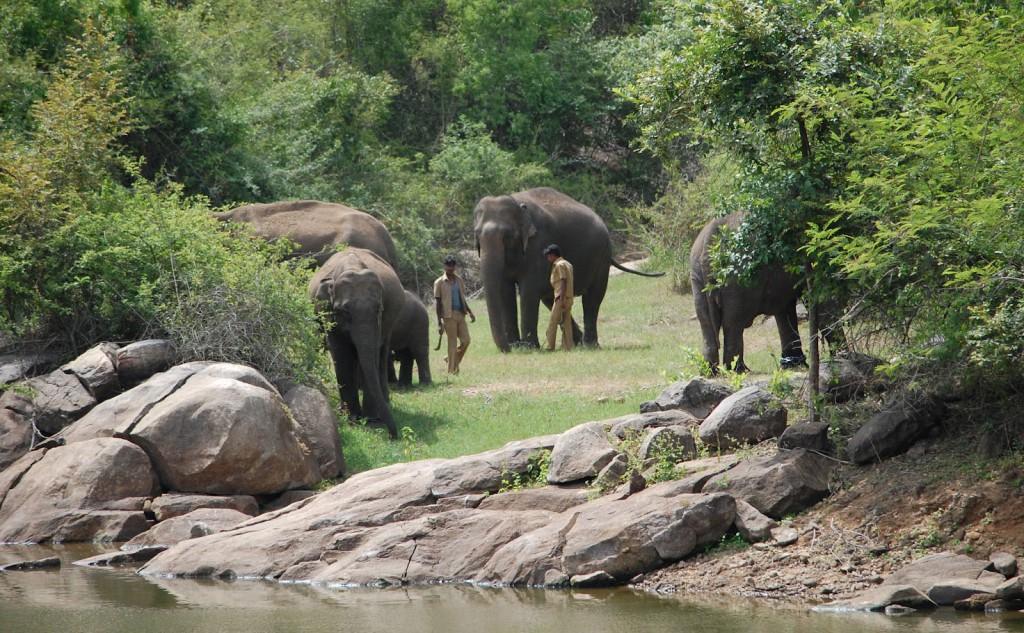 Bannerghatta National Park, The Popular Tourist Destination - Bangalore, Karnataka, Southern India