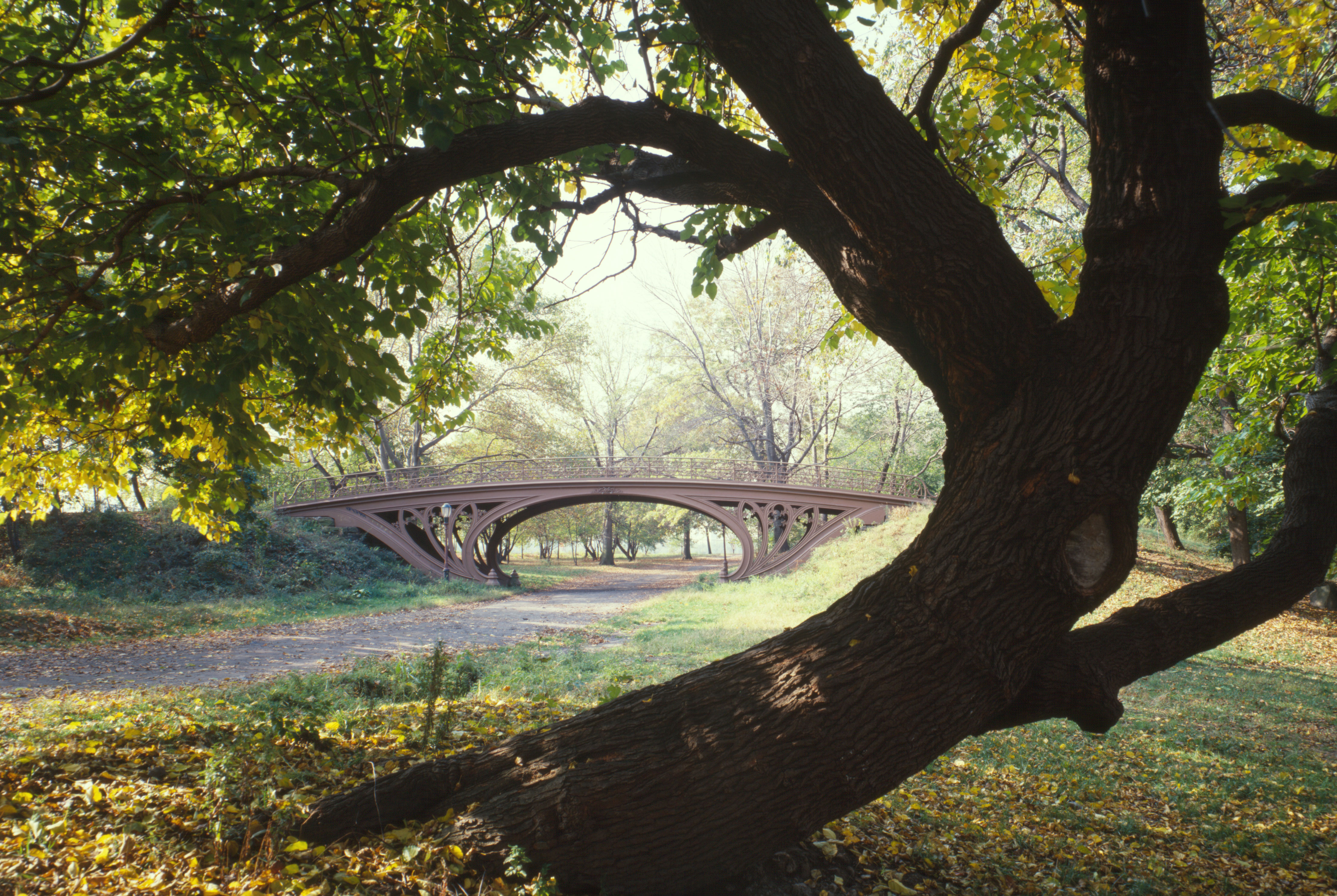 Beautiful-Central-Park-NY