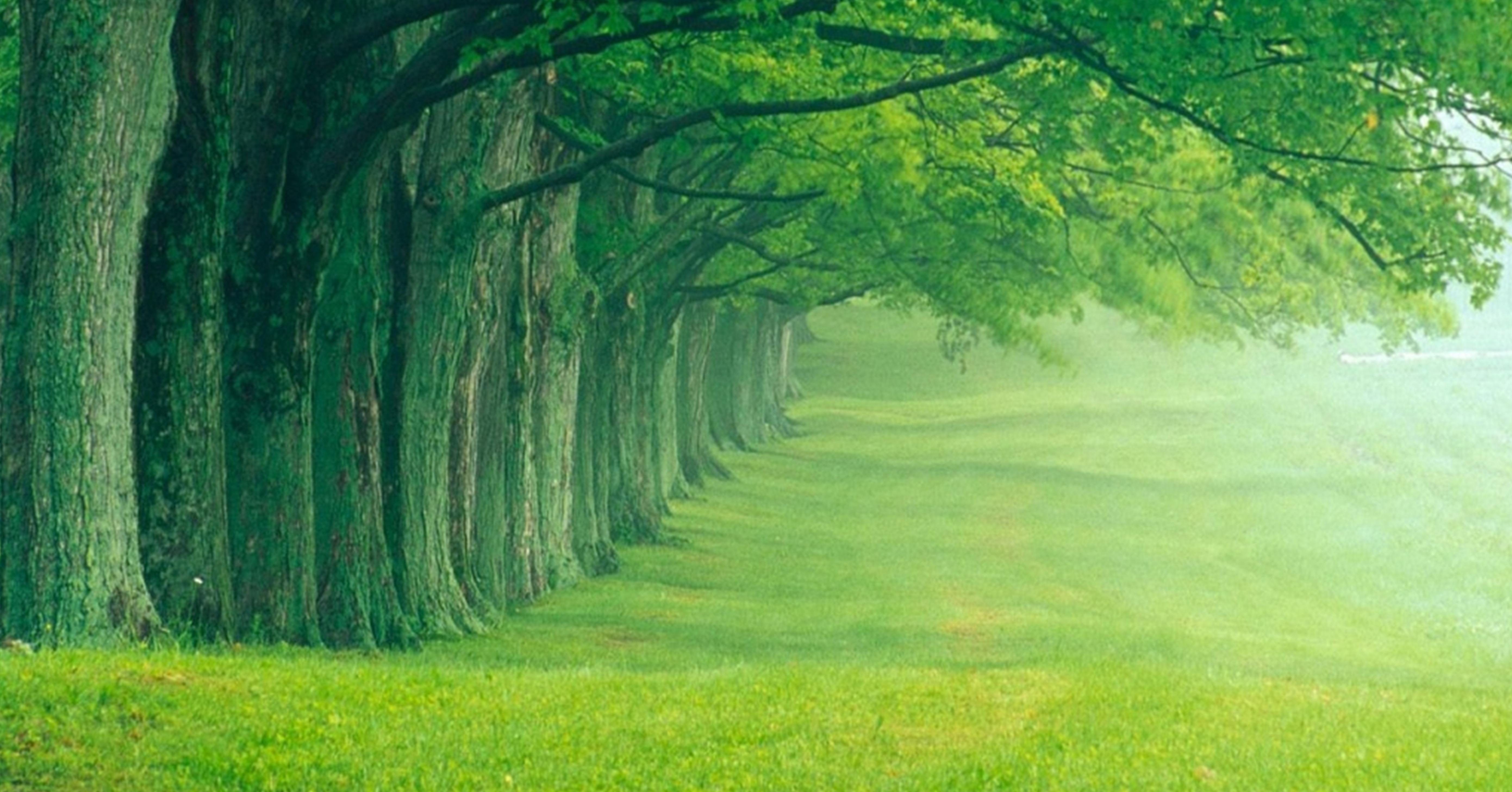 Beautiful Global Nature Wallpapers Fresh Air Sea Sun Rise Grass Green