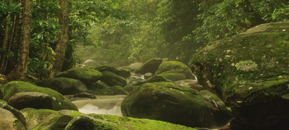 Great Smoky Mountains National Park Part Of Blue Ridge Mountains - United States
