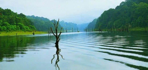 Thekkady, A Heaven For Natural Spices - Idukki, Kerala State Of India.