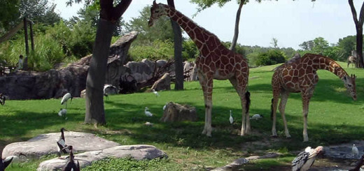 Busch Gardens Tampa - African Themed Animal Theme Park - Florida