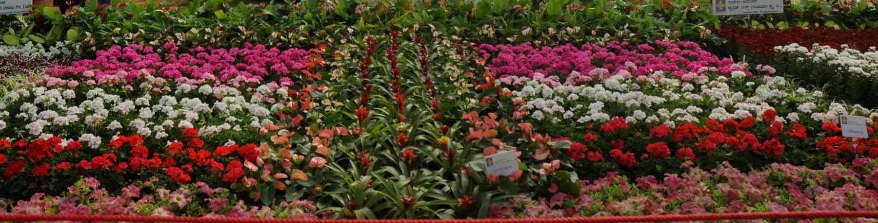 Lal Bagh, Bengaluru -  Lal Bagh Botanical Gardens