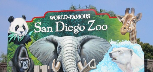 San Diego Zoo - A Beautiful Place of Species Near Balboa Park, California, United State