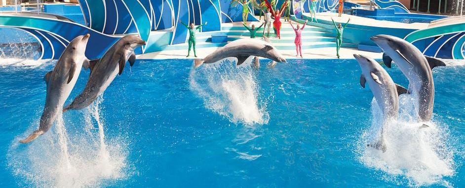 SeaWorld Orlando Park - Marine Based Zoological Park, Orlando, Florida