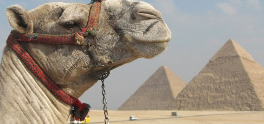 Wonderfull-View-of-Pyramids-With-Beautiful-Camel
