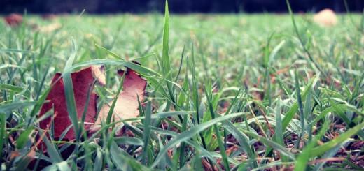 1 -grass nature beautiful leafs of grass
