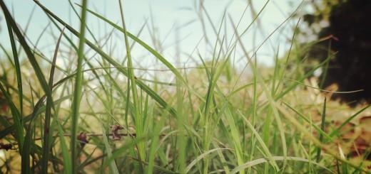Beautiful Green Grass HD Wallpapers