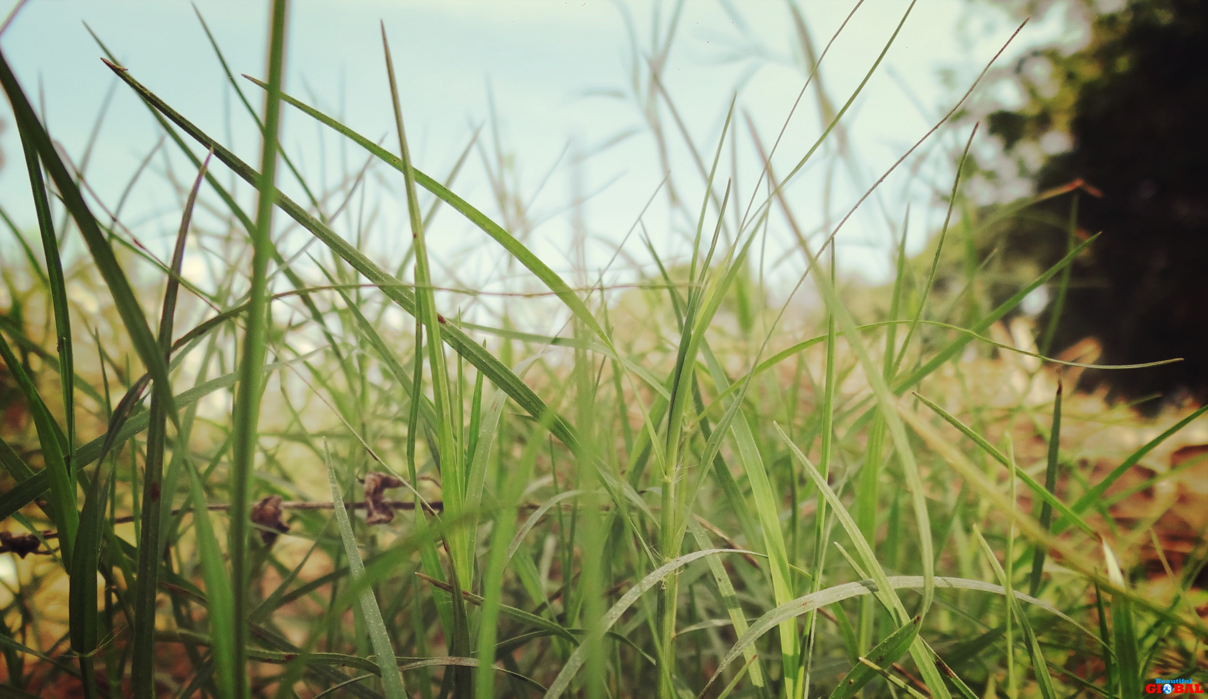 Hd wallpaper nature green - Beautiful Green Grass Hd Wallpapers Grass Green