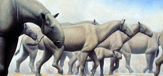 4 Biggest Animals in the World
