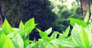 pure green nature wallpaper widescreen hd, Without Eiditing Wallpapers HD Download Free, Green America Hd Wallpapers