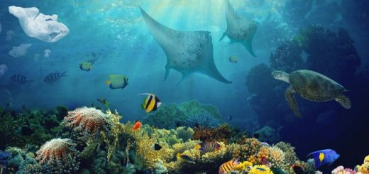 Great Barrier Reef Australia - Largest Living Thing On Earth - Beautiful Global (2)