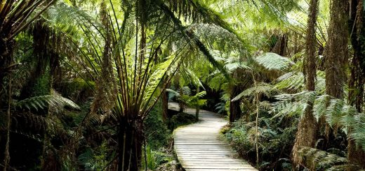 Great Otway National Park, Australia - beautiful global 001