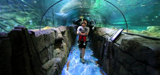 Sea Life Sydney Aquarium, Australia - Beautiful Global