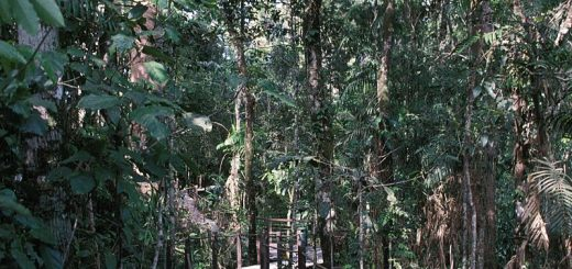 Skyrail Rainforest Cableway, Australia - beautiful global 001